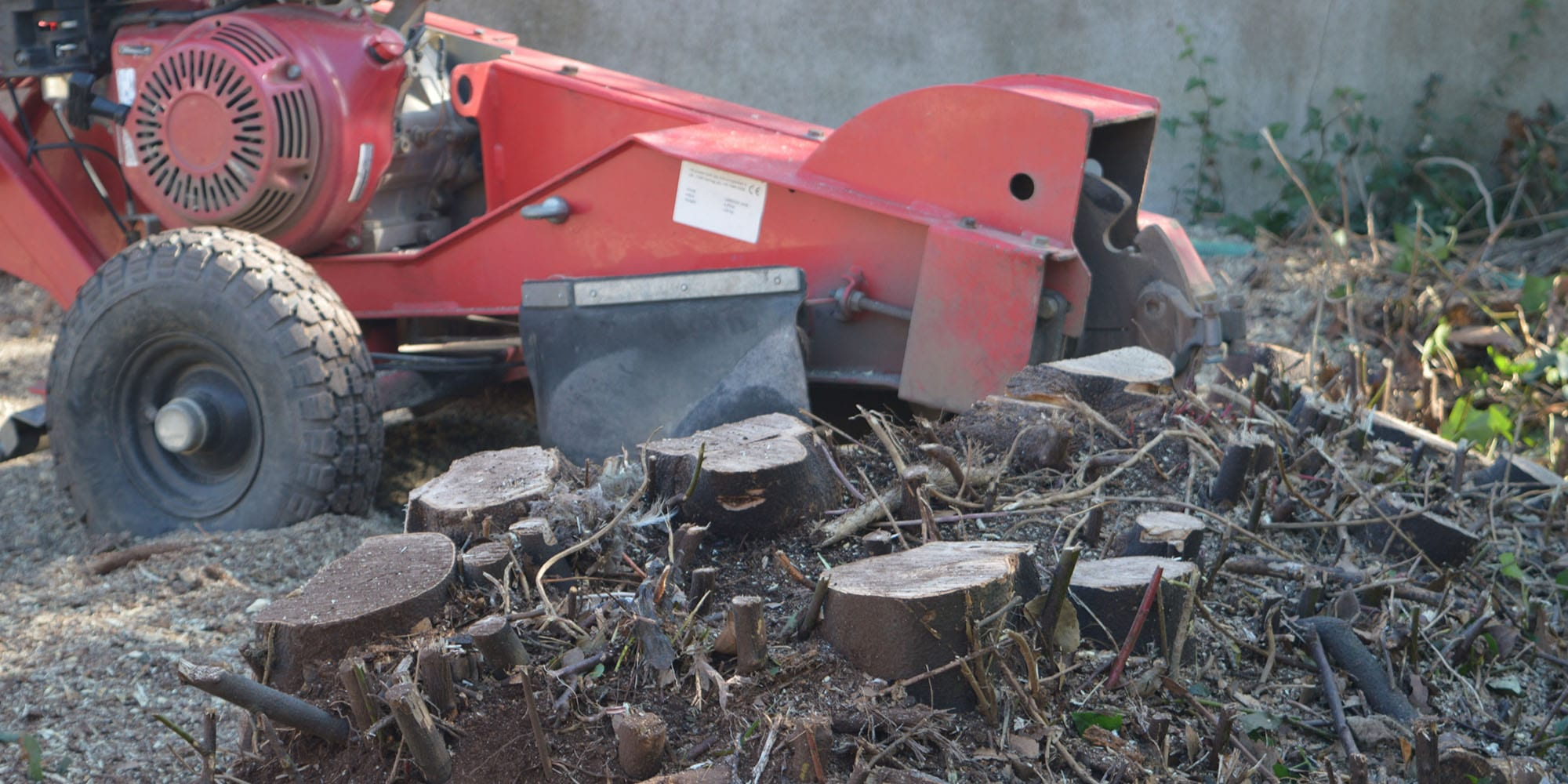 How to Remove a Tree Stump Without a Grinder
