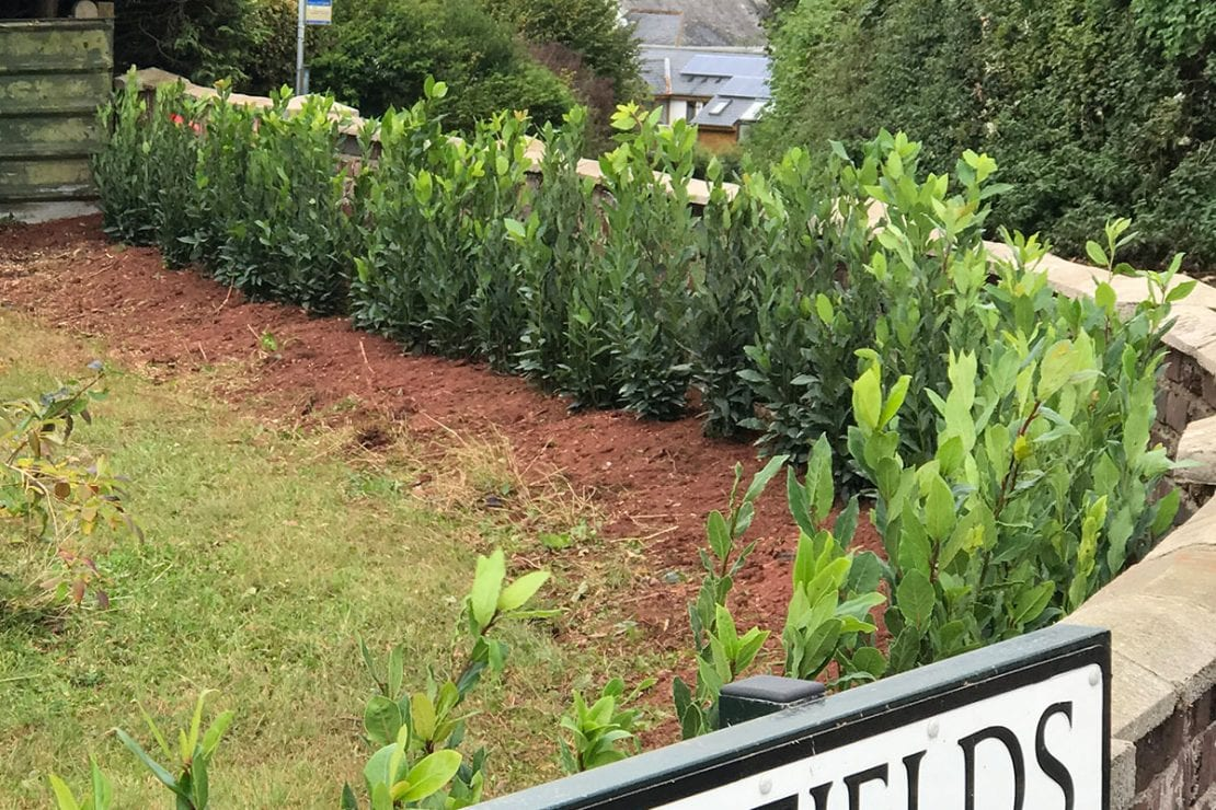 hedge planting services in Totnes