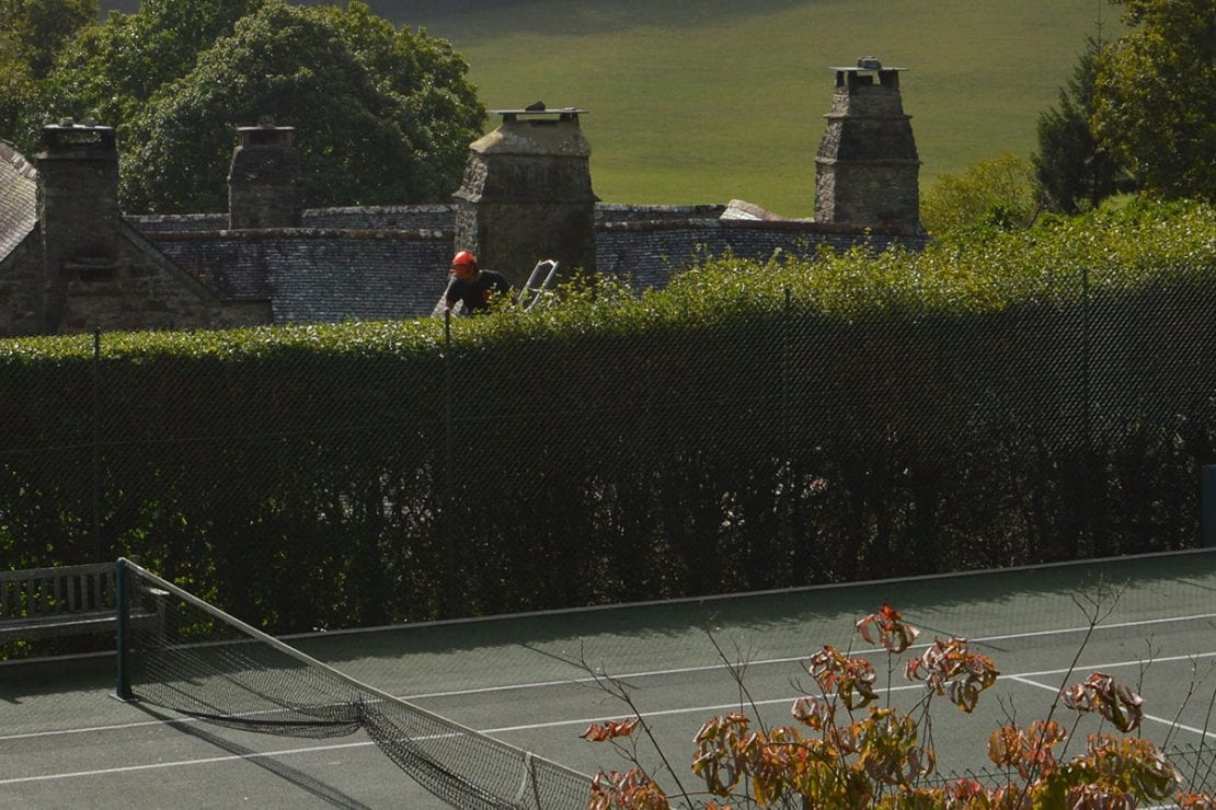 Hedge trimming services by Kneebone Trees