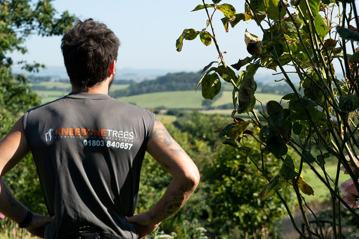 Tree Pruning Guide: How to Keep Your Trees Happy and Healthy